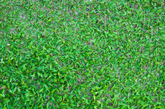 Football field green grass pattern textured background Stock Photography