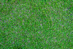 Football field green grass pattern textured background Royalty Free Stock Photo