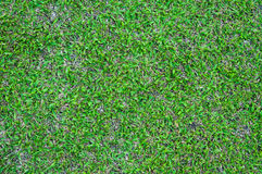 Football field green grass pattern textured background , textured grass Royalty Free Stock Images