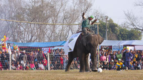 Football game - Elephant festival, Chitwan 2013, Nepal Stock Images
