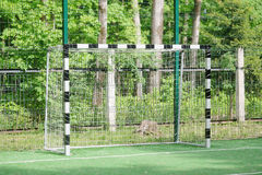 Football gates Stock Photo