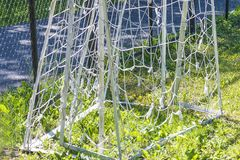 Football goal on sunny day Royalty Free Stock Images