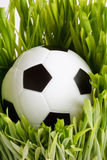 Football on grass Stock Photos