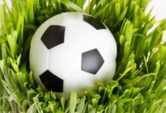 Football on the grass Royalty Free Stock Photo