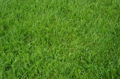 Football grass Stock Photography