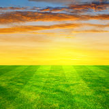 Football grass. In the sunset Royalty Free Stock Photo