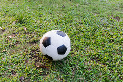 Football on green grass. Stock Photography