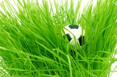 Football on green grass with text area copyspace Stock Images