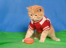 Football kitten Royalty Free Stock Photography
