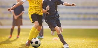Football match at the stadium. Soccer players competing in summer sunlight. Young football boys running after ball at grass pitch royalty free stock image