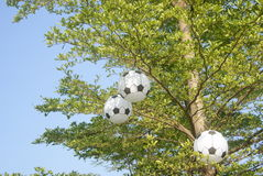 Football model hanging on the tree Royalty Free Stock Photos