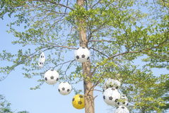 Football model hanging on the tree Royalty Free Stock Photography