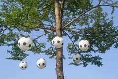 Football model hanging on the tree Stock Images