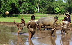 Football in the mud Stock Photography