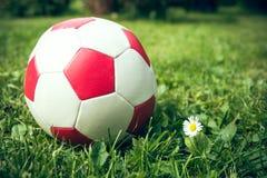 Football next daisies Royalty Free Stock Photography