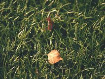 Football playfield. Outdoor soccer playground, poor grass at end of season with fallen leaves Stock Image