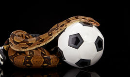 Football snake Stock Photos
