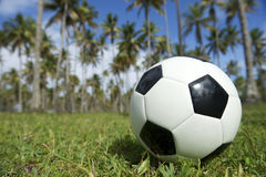 Football Soccer Ball Brazilian Palm Trees Grass Stock Photography
