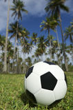 Football Soccer Ball Brazilian Palm Trees Grass Royalty Free Stock Images