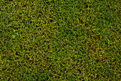 Football/soccer pitch Royalty Free Stock Photo
