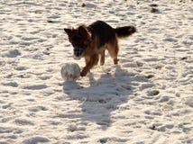 Footballer winter. Stock Photos