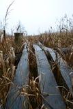 Footbridge близко к пруду стоковые фотографии rf