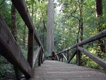 Footbridge в большом парке штата Redwoods таза Стоковая Фотография RF