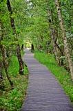footbridge Fotografia de Stock Royalty Free
