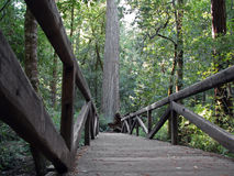 Footbridge in Big Basin Redwoods State Park Royalty Free Stock Photography