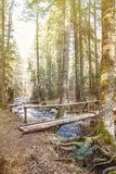 Footbridge crossing a pure mountain river in the forest Stock Photos