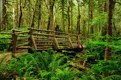 Footbridge in forest Stock Photo