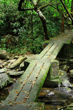 Footbridge in forest Royalty Free Stock Images