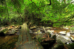 Footbridge in forest Royalty Free Stock Photography