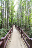 Footbridge in The Forest Stock Photography