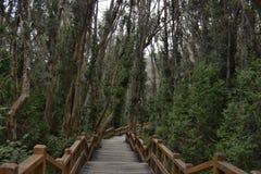 Footbridge in forest Stock Images