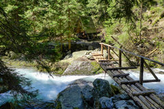 Footbridge in forest Royalty Free Stock Photo