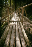 Footbridge in forest Royalty Free Stock Image