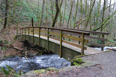 Footbridge in the forest Royalty Free Stock Photos