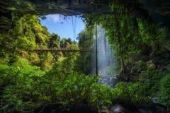 Footbridge i kryształ Spadamy w tropikalnym lesie deszczowym Dorrigo park narodowy Zdjęcia Royalty Free