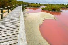 Footbridge over the pink water lagoon, Isabela island, Ecuador Stock Image