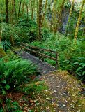 Pawn Bridge. Footbridge over Taylor Creek at the Pawn Old Growth Forest Trailhead - near Minerva, OR Royalty Free Stock Photos