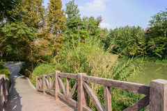 Footbridge over water in verdant plants on sunny day Stock Photos