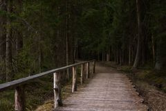 Footbridge Path Leading Deeper into the Forest, Moody Photo. On a late Spring Evening Stock Photos