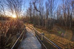 Footbridge path through woods in sunset light Royalty Free Stock Photography