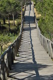 Footbridge of sand dunes covered with pine Iberian. Stock Image