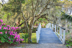 Footbridge in Southern Garden South Carolina Azalea. White wooden pedestrian footbridge over a southern swamp in a garden of blooming azaleas, trees, and hanging stock photo