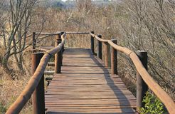 FOOTBRIDGE SURROUNDED BY DRY WINTER VEGETATION. View of wooden footbridge platform over ditch with dry vegetation in a park in winter Royalty Free Stock Image