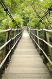 Footbridge in tropical jungle Stock Image