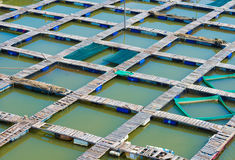 Footbridges at fish breeding farm, Vietnam Royalty Free Stock Photography