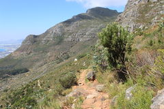 Footh path in table mountain national park nature outdoors cape town africa travel. Path in a national park just outside of Cape Town, south africa Royalty Free Stock Photography
